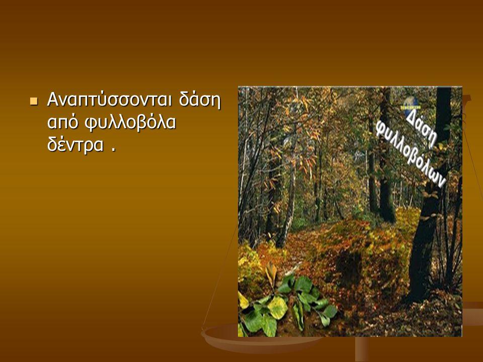 Αναπτύσσονται δάση από φυλλοβόλα δέντρα. Αναπτύσσονται δάση από φυλλοβόλα δέντρα.