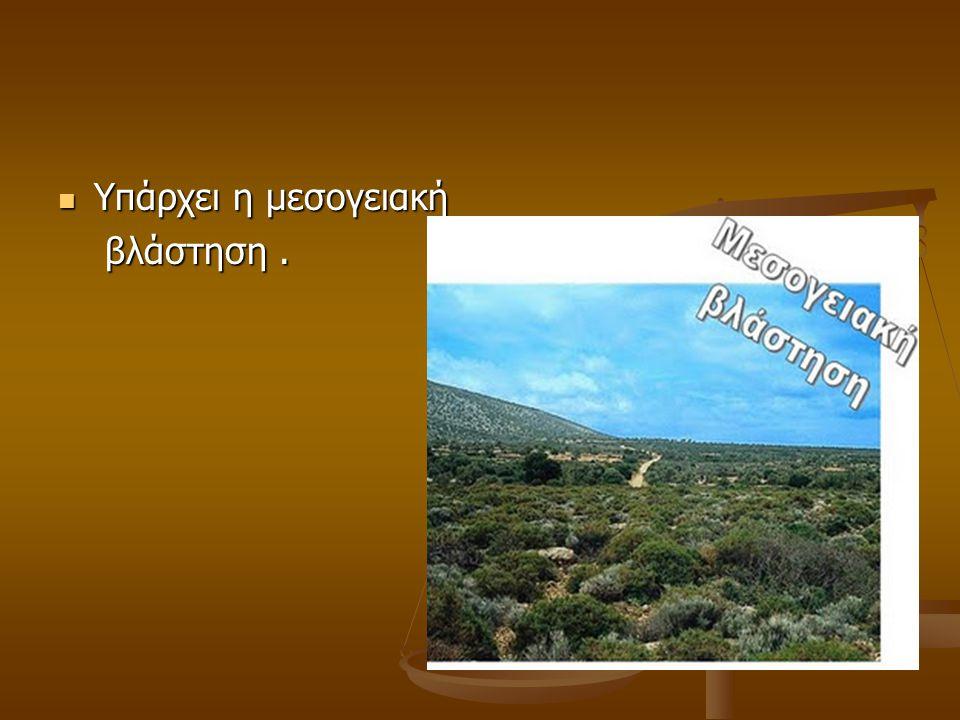 Υπάρχει η μεσογειακή Υπάρχει η μεσογειακή βλάστηση. βλάστηση.