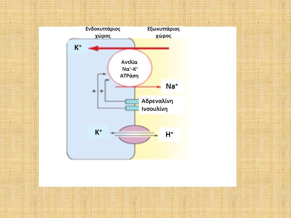 Εξωκυττάριος χώρος Ενδοκυττάριος χώρος Αδρεναλίνη Ινσουλίνη Αντλία Να + -Κ + ATPάση Na + H+H+ K+K+ K+K+