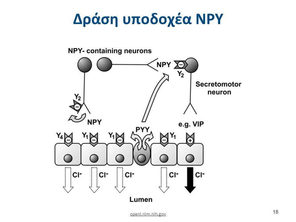 Δράση υποδοχέα NPY openi.nlm.nih.gov 18