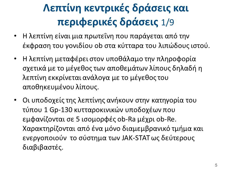 Λεπτίνη κεντρικές δράσεις και περιφερικές δράσεις 1/9 Η λεπτίνη είναι μια πρωτεΐνη που παράγεται από την έκφραση του γονιδίου ob στα κύτταρα του λιπώδ