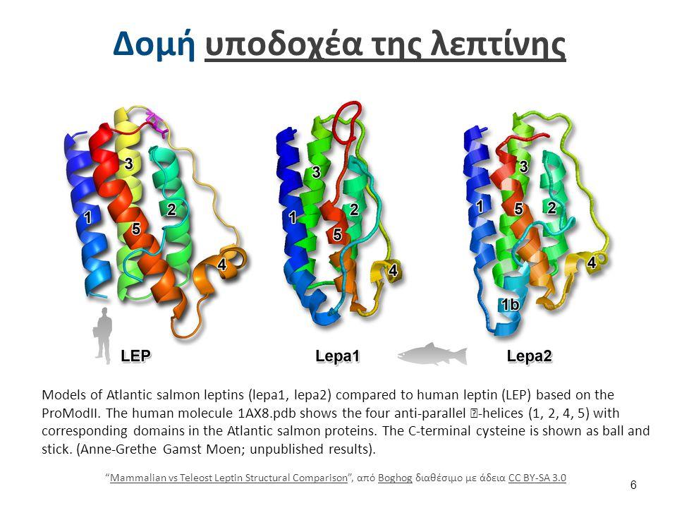 Δομή υποδοχέα της λεπτίνηςυποδοχέα της λεπτίνης Models of Atlantic salmon leptins (lepa1, lepa2) compared to human leptin (LEP) based on the ProModII.