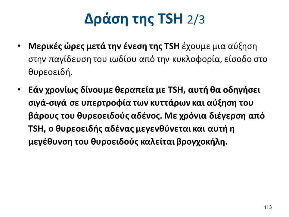 Δράση της TSH 2/3 Μερικές ώρες μετά την ένεση της TSH έχουμε μια αύξηση στην παγίδευση του ιωδίου από την κυκλοφορία, είσοδο στο θυρεοειδή. Εάν χρονίω