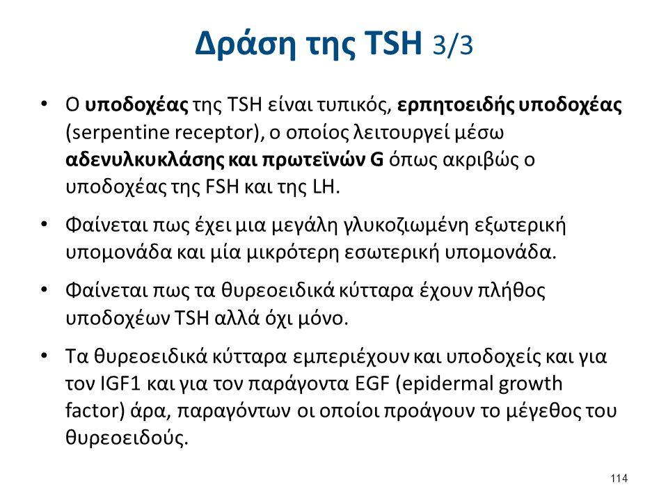 Δράση της TSH 3/3 Ο υποδοχέας της TSH είναι τυπικός, ερπητοειδής υποδοχέας (serpentine receptor), ο οποίος λειτουργεί μέσω αδενυλκυκλάσης και πρωτεϊνώ