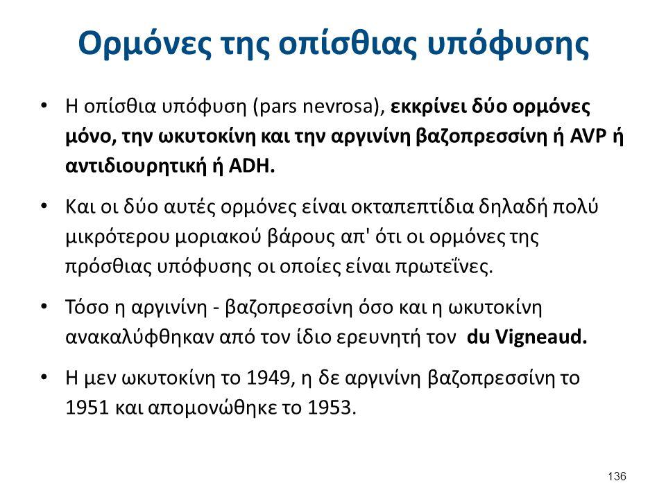 Ορμόνες της οπίσθιας υπόφυσης Η οπίσθια υπόφυση (pars nevrosa), εκκρίνει δύο ορμόνες μόνο, την ωκυτοκίνη και την αργινίνη βαζοπρεσσίνη ή AVP ή αντιδιο