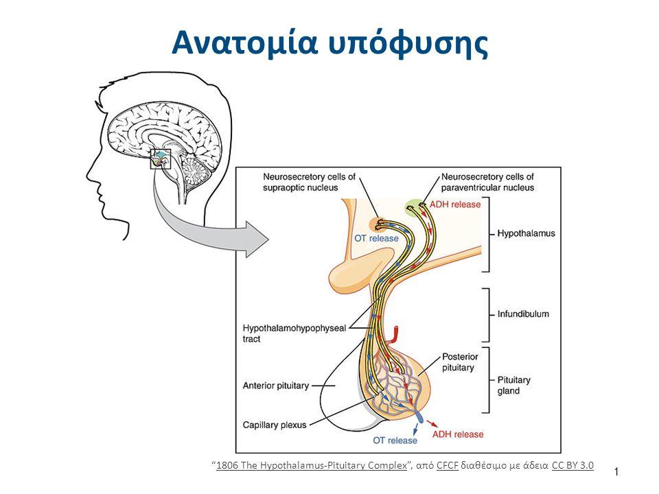 """Ανατομία υπόφυσης """"1806 The Hypothalamus-Pituitary Complex"""", από CFCF διαθέσιμο με άδεια CC BY 3.01806 The Hypothalamus-Pituitary ComplexCFCFCC BY 3.0"""