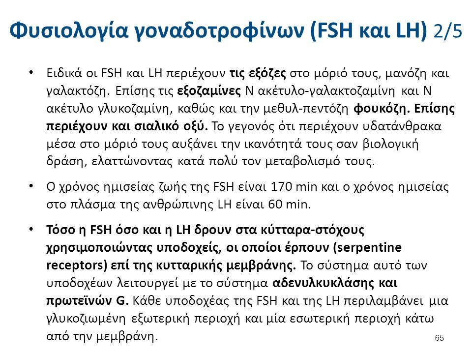 Φυσιολογία γοναδοτροφίνων (FSH και LH) 2/5 Ειδικά οι FSH και LΗ περιέχουν τις εξόζες στο μόριό τους, μανόζη και γαλακτόζη. Επίσης τις εξοζαμίνες Ν ακέ