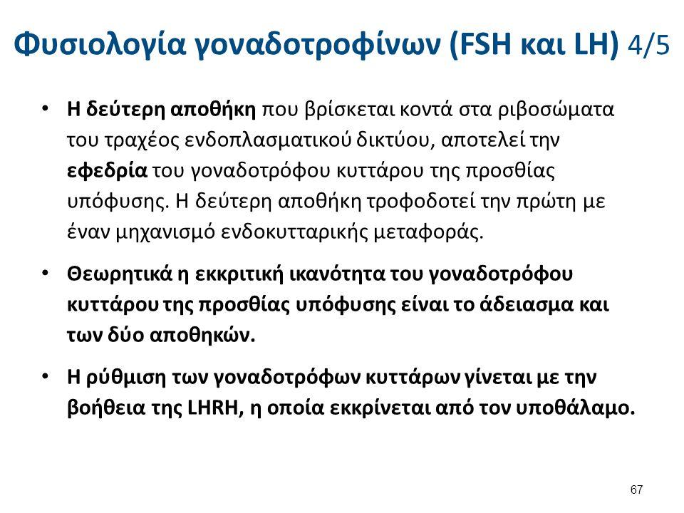 Φυσιολογία γοναδοτροφίνων (FSH και LH) 4/5 Η δεύτερη αποθήκη που βρίσκεται κοντά στα ριβοσώματα του τραχέος ενδοπλασματικού δικτύου, αποτελεί την εφεδ
