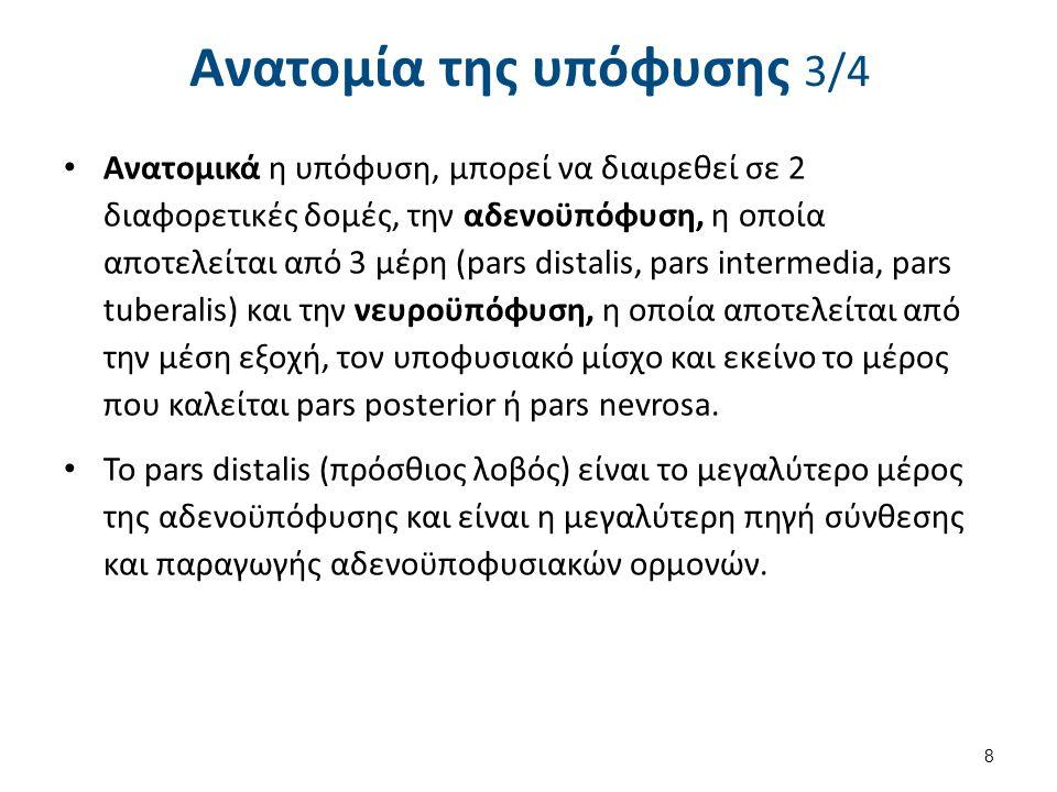 Ανατομία της υπόφυσης 3/4 Ανατομικά η υπόφυση, μπορεί να διαιρεθεί σε 2 διαφορετικές δομές, την αδενοϋπόφυση, η οποία αποτελείται από 3 μέρη (pars dis