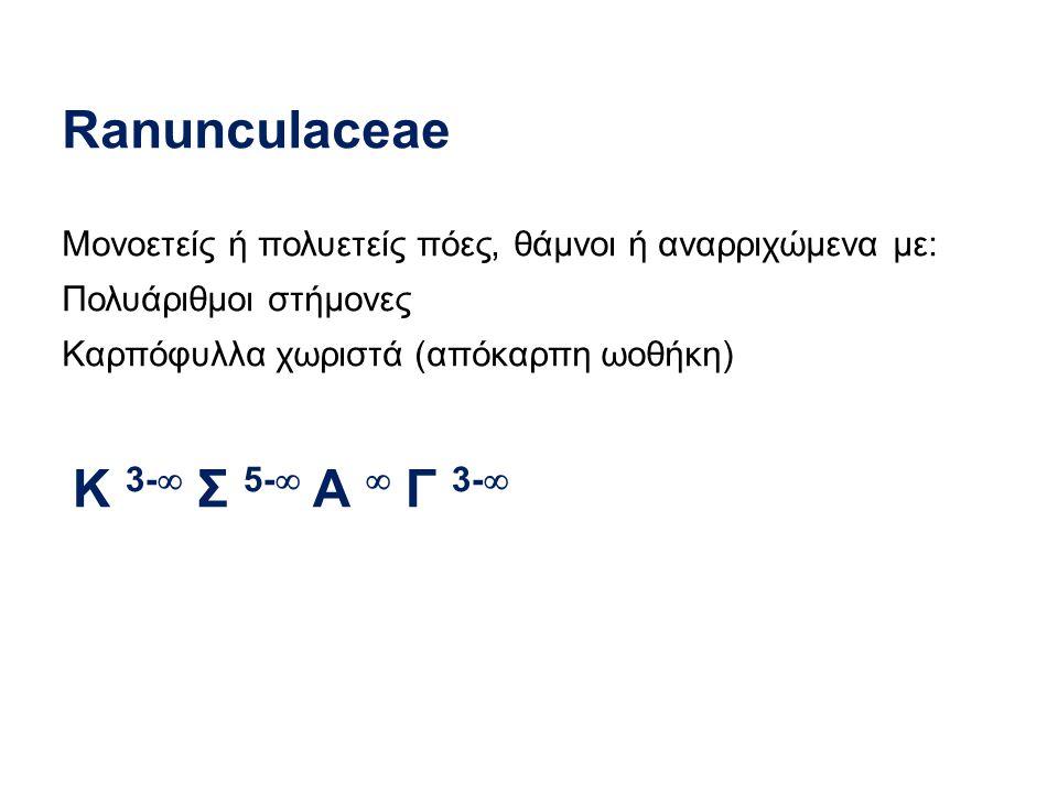 Ranunculaceae Μονοετείς ή πολυετείς πόες, θάμνοι ή αναρριχώμενα με: Πολυάριθμοι στήμονες Καρπόφυλλα χωριστά (απόκαρπη ωοθήκη) Κ 3-  Σ 5-  Α  Γ 3- 
