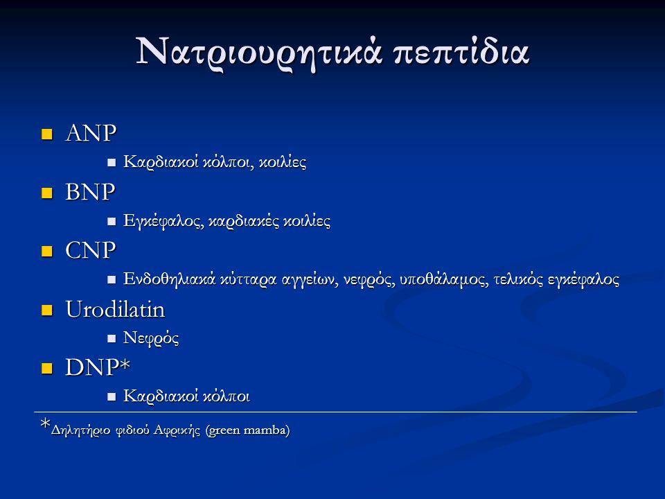 Δράσεις νατριουρητικών πεπτιδίων Χάλαση των λείων μυικών ινών Χάλαση των λείων μυικών ινών Αγγειοδιαστολή Αγγειοδιαστολή Μείωση αρτηριακής πίεσης Μείωση αρτηριακής πίεσης Σπειραματική υπερδιήθηση Σπειραματική υπερδιήθηση Αύξηση του διηθούμενου Na + και H 2 O Αύξηση του διηθούμενου Na + και H 2 O Μείωση της επαναρρόφησης Na + Μείωση της επαναρρόφησης Na + Μυελικά αθροιστικά σωληνάρια Μυελικά αθροιστικά σωληνάρια Εγγύς εσπειραμένα σωληνάρια Εγγύς εσπειραμένα σωληνάρια Καταστολή της απελευθέρωσης ρενίνης Καταστολή της απελευθέρωσης ρενίνης Μείωση της επαναρρόφησης Na + Μείωση της επαναρρόφησης Na + Ανταγωνισμός της δράσης της ADH Ανταγωνισμός της δράσης της ADH