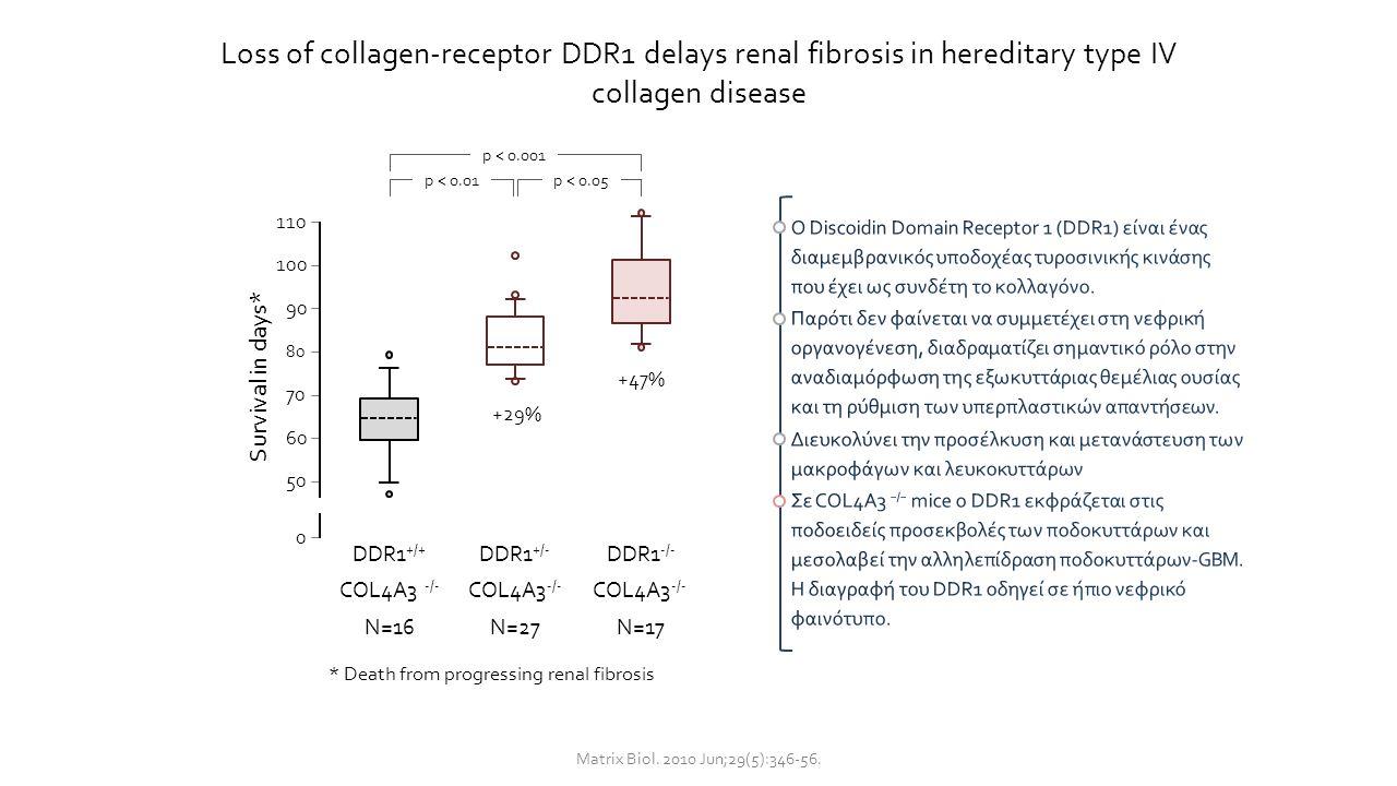 Loss of collagen-receptor DDR1 delays renal fibrosis in hereditary type IV collagen disease Matrix Biol. 2010 Jun;29(5):346-56. 110 100 50 90 80 70 60