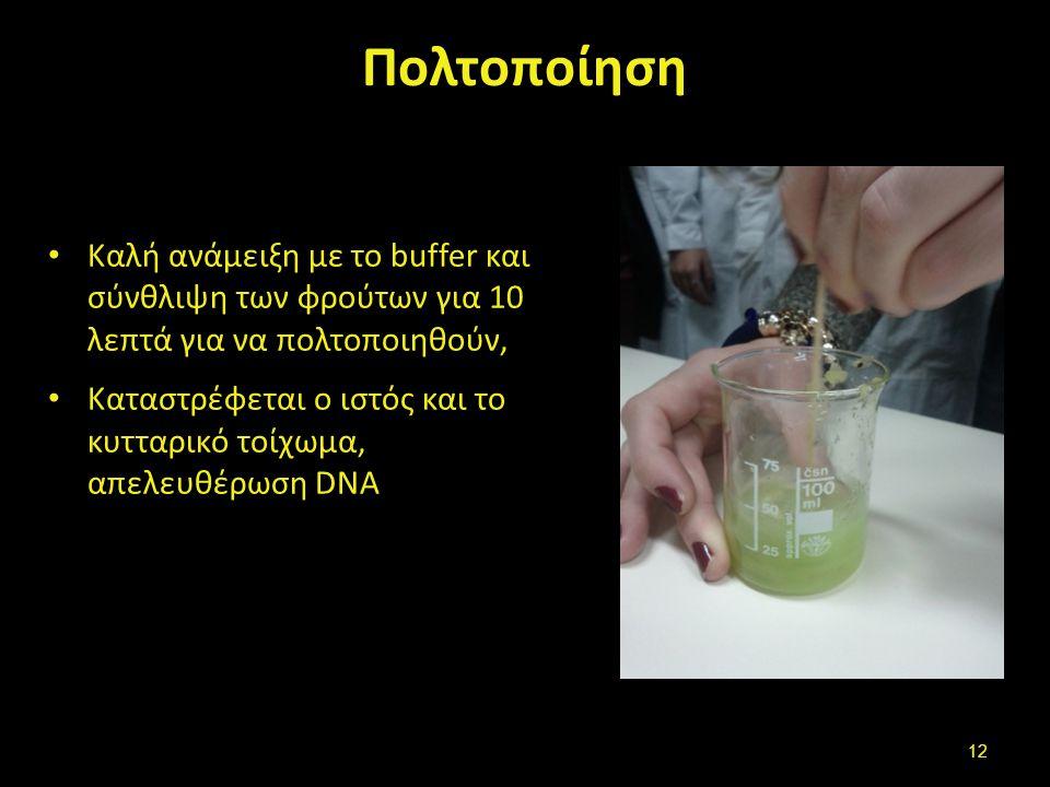 Πολτοποίηση Καλή ανάμειξη με το buffer και σύνθλιψη των φρούτων για 10 λεπτά για να πολτοποιηθούν, Καταστρέφεται ο ιστός και το κυτταρικό τοίχωμα, απε