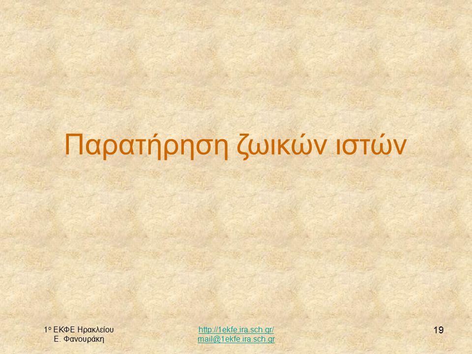 1 ο ΕΚΦΕ Ηρακλείου Ε. Φανουράκη http://1ekfe.ira.sch.gr/ mail@1ekfe.ira.sch.gr 19 Παρατήρηση ζωικών ιστών
