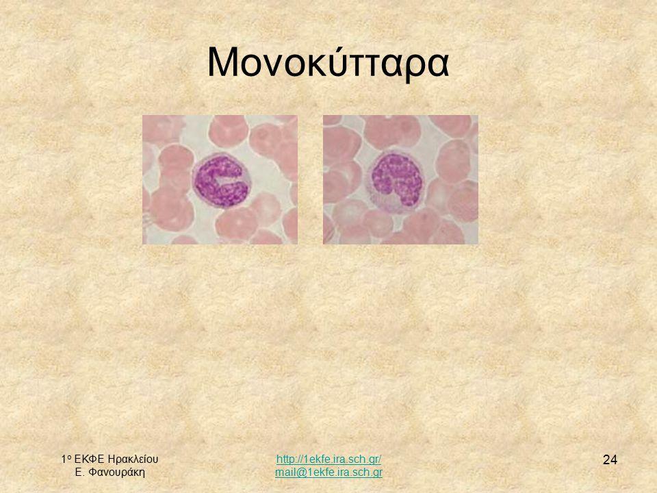 1 ο ΕΚΦΕ Ηρακλείου Ε. Φανουράκη http://1ekfe.ira.sch.gr/ mail@1ekfe.ira.sch.gr 24 Μονοκύτταρα