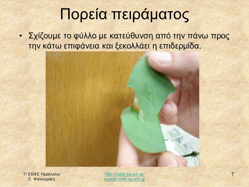 1 ο ΕΚΦΕ Ηρακλείου Ε. Φανουράκη http://1ekfe.ira.sch.gr/ mail@1ekfe.ira.sch.gr 7 Σχίζουμε το φύλλο με κατεύθυνση από την πάνω προς την κάτω επιφάνεια