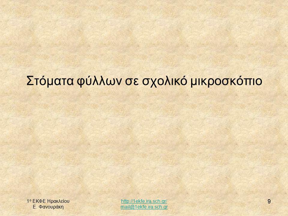 1 ο ΕΚΦΕ Ηρακλείου Ε. Φανουράκη http://1ekfe.ira.sch.gr/ mail@1ekfe.ira.sch.gr 9 Στόματα φύλλων σε σχολικό μικροσκόπιο