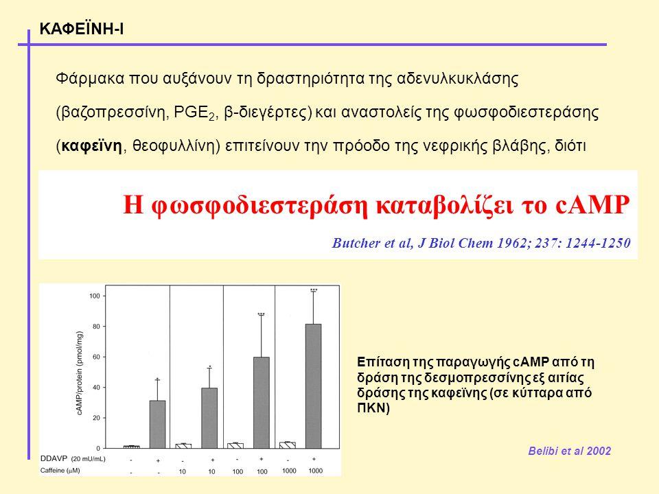 Φάρμακα που αυξάνουν τη δραστηριότητα της αδενυλκυκλάσης (βαζοπρεσσίνη, PGE 2, β-διεγέρτες) και αναστολείς της φωσφοδιεστεράσης (καφεϊνη, θεοφυλλίνη) επιτείνουν την πρόοδο της νεφρικής βλάβης, διότι αυξάνουν την συγκέντρωση του cAMP στις νεφρικές κύστεις Dousa et al 1994 Grantham et al 1997 Tanner & Tanner 2001 ΚΑΦΕΪΝΗ-Ι Belibi et al 2002 Επίταση της παραγωγής cAMP από τη δράση της δεσμοπρεσσίνης εξ αιτίας δράσης της καφεϊνης (σε κύτταρα από ΠΚΝ) Η φωσφοδιεστεράση καταβολίζει το cAMP Butcher et al, J Biol Chem 1962; 237: 1244-1250