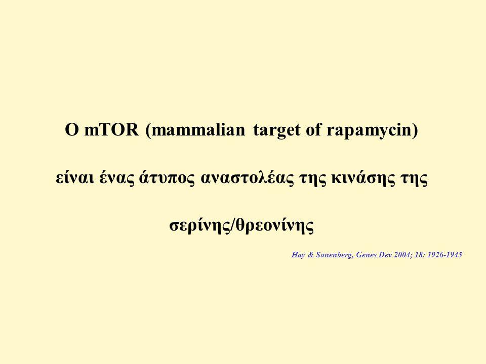 Ο mTOR (mammalian target of rapamycin) είναι ένας άτυπος αναστολέας της κινάσης της σερίνης/θρεονίνης Hay & Sonenberg, Genes Dev 2004; 18: 1926-1945