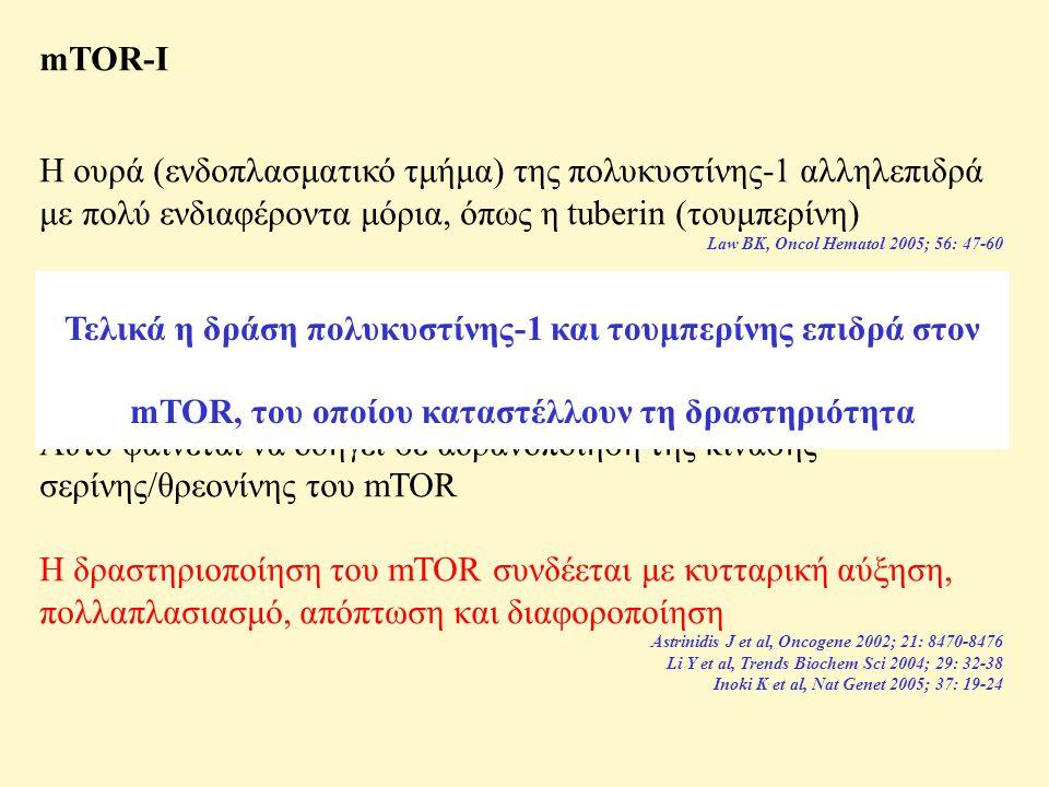 mTOR-I Η ουρά (ενδοπλασματικό τμήμα) της πολυκυστίνης-1 αλληλεπιδρά με πολύ ενδιαφέροντα μόρια, όπως η tuberin (τουμπερίνη) Law BK, Oncol Hematol 2005; 56: 47-60 Η τουμπερίνη πρέπει να παίζει ρόλο στην ενδοκυττάρια μεταφορά της πολυκυστίνης-1 Kleymenova E et al, Mol Cell 2001; 7: 823-832 Shillingford JM et al, Proc Natl Acad Sci USA 2006; 103: 5466-5471 Αυτό φαίνεται να οδηγεί σε αδρανοποίηση της κινάσης σερίνης/θρεονίνης του mTOR Η δραστηριοποίηση του mTOR συνδέεται με κυτταρική αύξηση, πολλαπλασιασμό, απόπτωση και διαφοροποίηση Astrinidis J et al, Oncogene 2002; 21: 8470-8476 Li Y et al, Trends Biochem Sci 2004; 29: 32-38 Inoki K et al, Nat Genet 2005; 37: 19-24 Τελικά η δράση πολυκυστίνης-1 και τουμπερίνης επιδρά στον mTOR, του οποίου καταστέλλουν τη δραστηριότητα