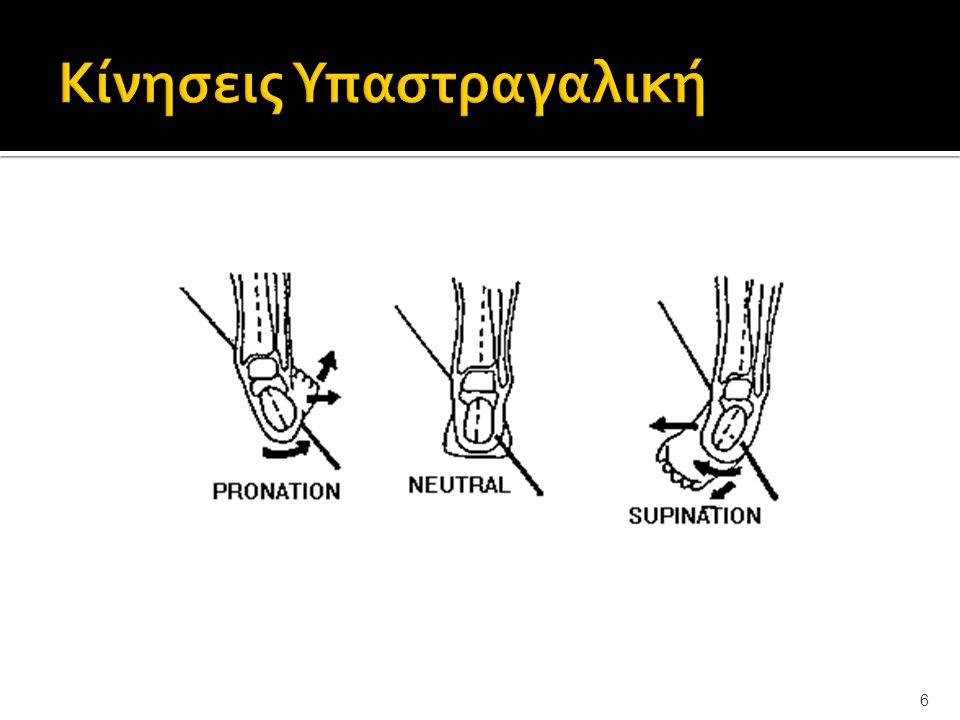 17 Μύες Οπίσθιας Επιφάνειας Πρόσθιος κνημιαίος Βραχύς περονιαίος Καθεκτικός σύνδεσμος των εκτεινόντων μυών Μακρός περονιαίος Μακρός εκτείνων των δακτύλων Τρίτος περονιαίος τένοντας του μακρού εκτείνοντα των δακτύλων Βραχύς περονιαίος Μακρός εκτείνων του Μ δακτύλου Τένοντας Πρόσθιου κνημιαίου