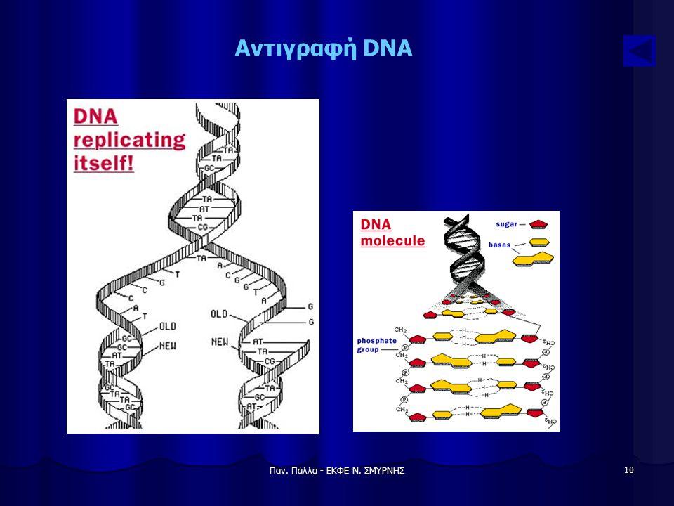 Παν. Πάλλα - ΕΚΦΕ Ν. ΣΜΥΡΝΗΣ 10 Αντιγραφή DNA