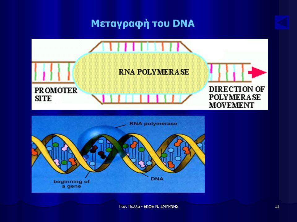 Παν. Πάλλα - ΕΚΦΕ Ν. ΣΜΥΡΝΗΣ 11 Μεταγραφή του DNA