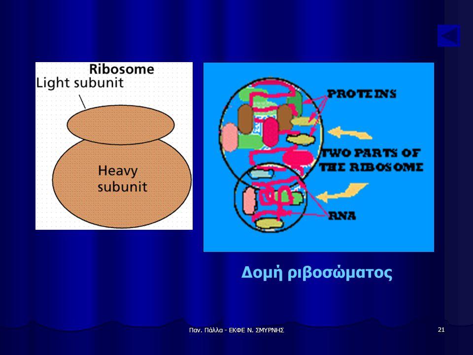 Παν. Πάλλα - ΕΚΦΕ Ν. ΣΜΥΡΝΗΣ 21 Δομή ριβοσώματος