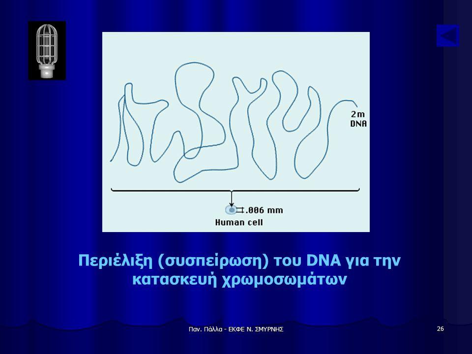 Παν. Πάλλα - ΕΚΦΕ Ν. ΣΜΥΡΝΗΣ 26 Περιέλιξη (συσπείρωση) του DNA για την κατασκευή χρωμοσωμάτων