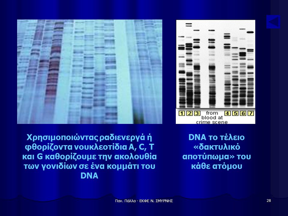 Παν. Πάλλα - ΕΚΦΕ Ν. ΣΜΥΡΝΗΣ 28 Χρησιμοποιώντας ραδιενεργά ή φθορίζοντα νουκλεοτίδια A, C, T και G καθορίζουμε την ακολουθία των γονιδίων σε ένα κομμά