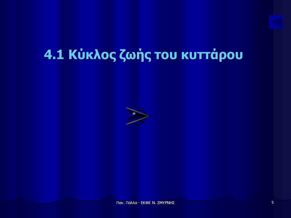 Παν. Πάλλα - ΕΚΦΕ Ν. ΣΜΥΡΝΗΣ 16 Μετάφραση AUG= έναρξη ***= επιμήκυνση UAA= τερματισμός