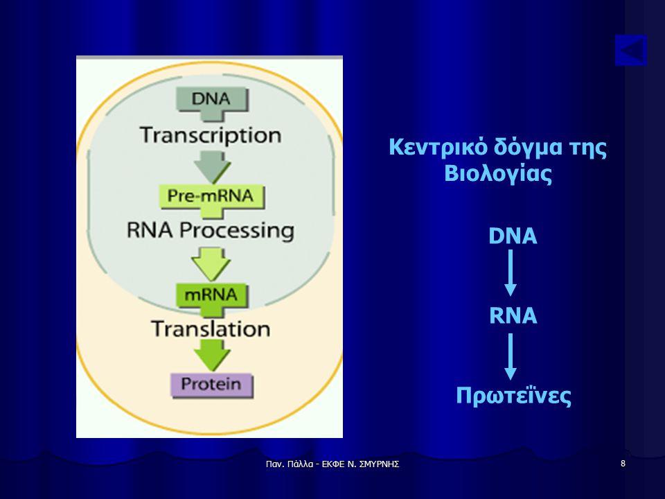 Παν. Πάλλα - ΕΚΦΕ Ν. ΣΜΥΡΝΗΣ 9 Αντιγραφή DNA