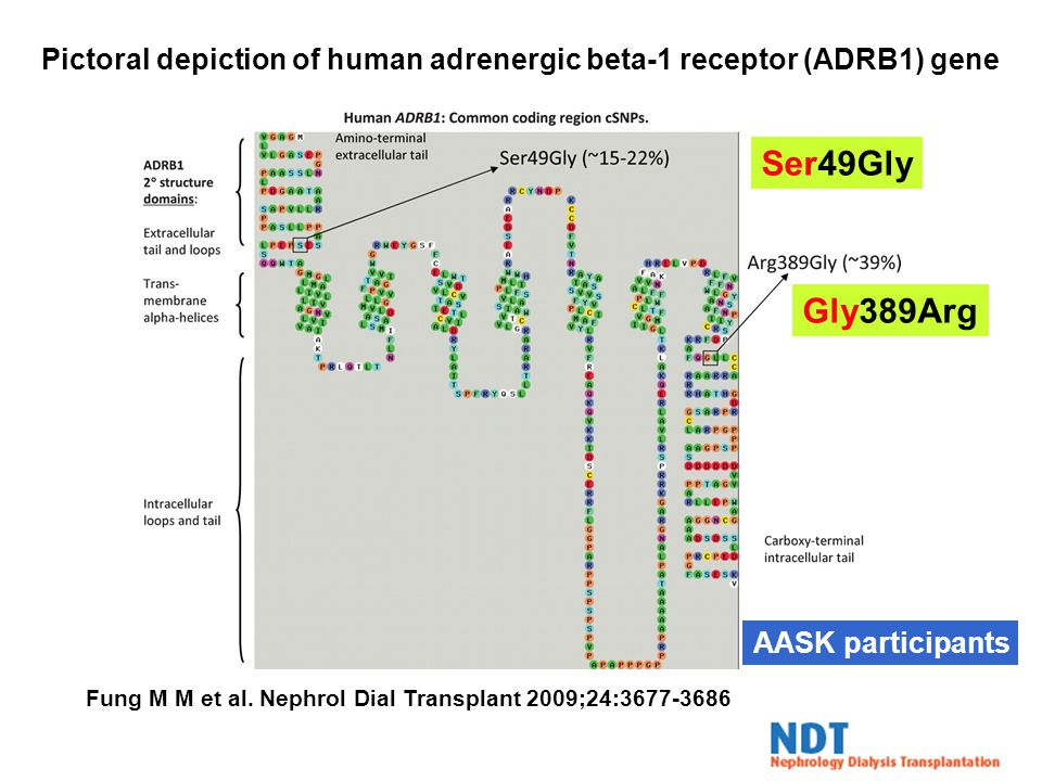 Pictoral depiction of human adrenergic beta-1 receptor (ADRB1) gene Fung M M et al.