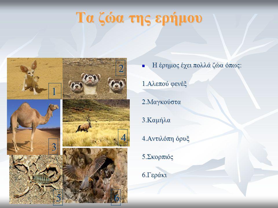 Τα ζώα της ερήμου Η έρημος έχει πολλά ζώα όπως: Η έρημος έχει πολλά ζώα όπως: 1.Αλεπού φενέξ 2.Μαγκούστα3.Καμήλα 4.Αντιλόπη όρυξ 5.Σκορπιός6.Γεράκι1 2