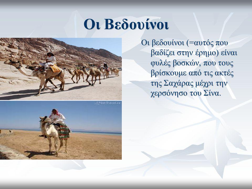 Οι Βεδουίνοι Οι βεδουίνοι (=αυτός που βαδίζει στην έρημο) είναι φυλές βοσκών, που τους βρίσκουμε από τις ακτές της Σαχάρας μέχρι την χερσόνησο του Σίν