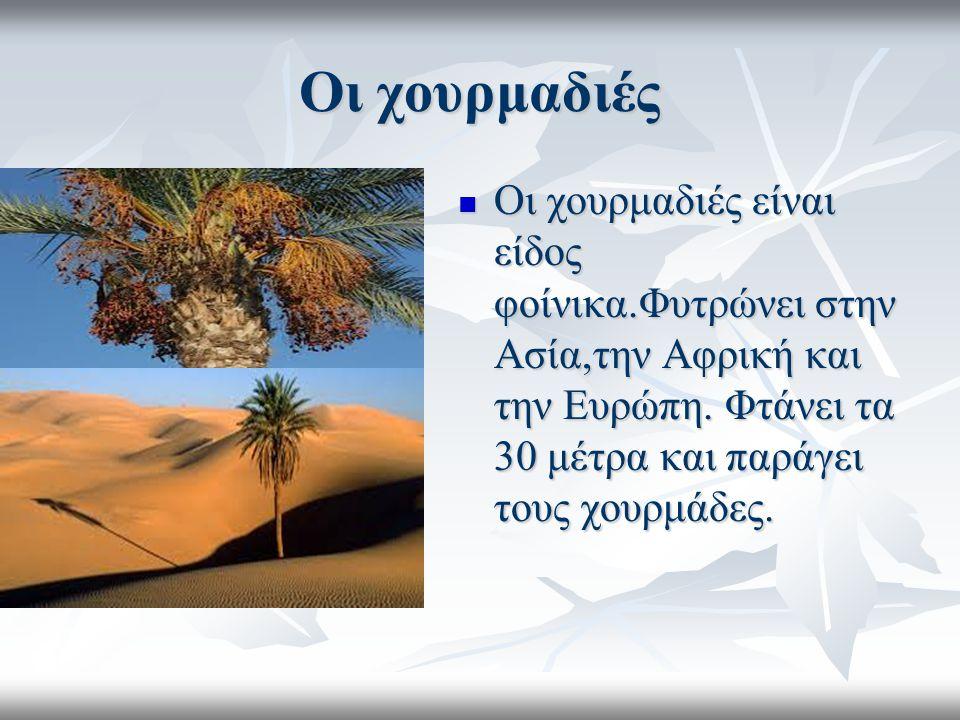Οι χουρμαδιές Οι χουρμαδιές είναι είδος φοίνικα.Φυτρώνει στην Ασία,την Αφρική και την Ευρώπη. Φτάνει τα 30 μέτρα και παράγει τους χουρμάδες. Οι χουρμα