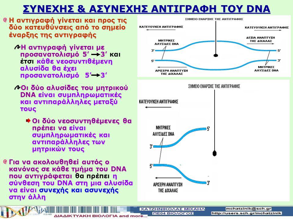 ΕΝΖΥΜΑ ΠΟΥ ΣHΜΜΕΤΕΧΟΥΝ ΣΤΗΝ ΑΝΤΙΓΡΑΦΗ ΤΟΥ DNA Περιορισμοί λειτουργίας της DNA-πολυμεράσης Λειτουργεί μόνο προς καθορισμένη κατεύθυνση και τοποθετεί νο