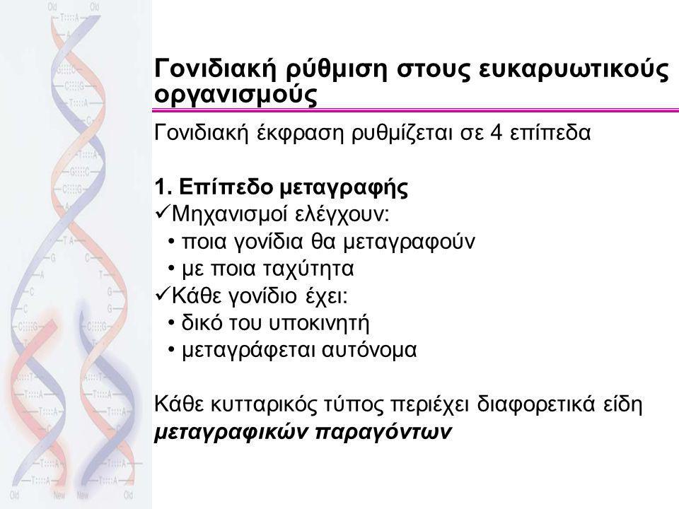 Γονιδιακή ρύθμιση στους ευκαρυωτικούς οργανισμούς Γονιδιακή έκφραση ρυθμίζεται σε 4 επίπεδα 1. Επίπεδο μεταγραφής Μηχανισμοί ελέγχουν: ποια γονίδια θα