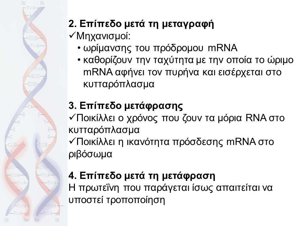2. Επίπεδο μετά τη μεταγραφή Μηχανισμοί: ωρίμανσης του πρόδρομου mRNA καθορίζουν την ταχύτητα με την οποία το ώριμο mRNA αφήνει τον πυρήνα και εισέρχε