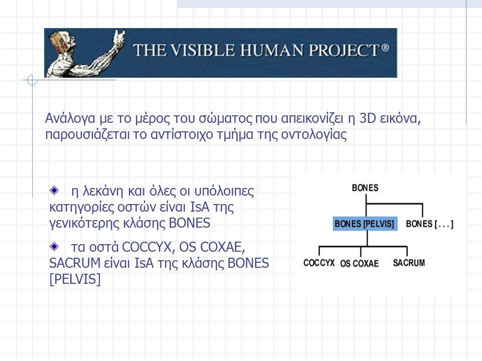 η λεκάνη και όλες οι υπόλοιπες κατηγορίες οστών είναι IsA της γενικότερης κλάσης BONES τα οστά COCCYX, OS COXAE, SACRUM είναι IsA της κλάσης BONES [PE