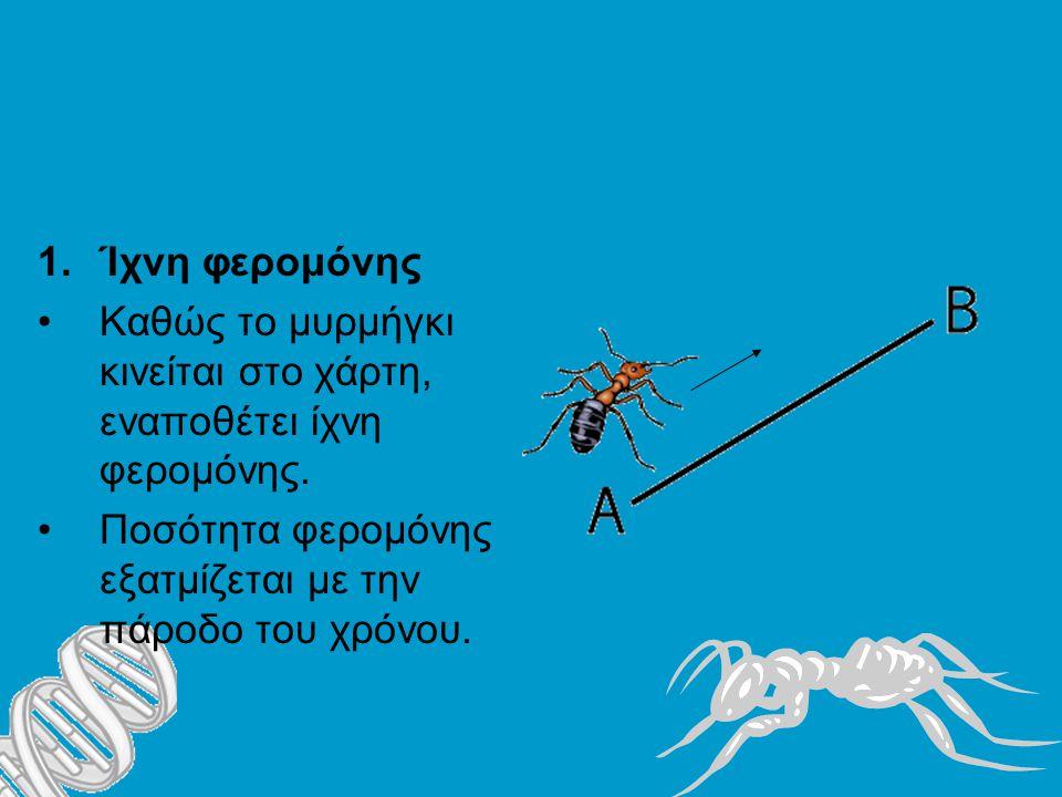1.Ίχνη φερομόνης Καθώς το μυρμήγκι κινείται στο χάρτη, εναποθέτει ίχνη φερομόνης.