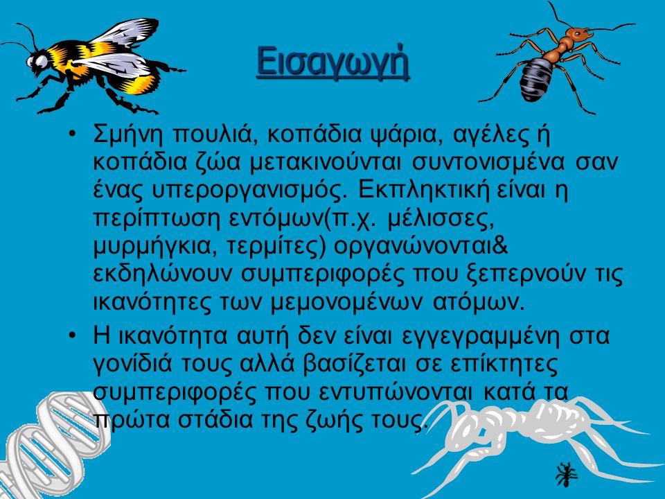 Εισαγωγή Σμήνη πουλιά, κοπάδια ψάρια, αγέλες ή κοπάδια ζώα μετακινούνται συντονισμένα σαν ένας υπεροργανισμός.