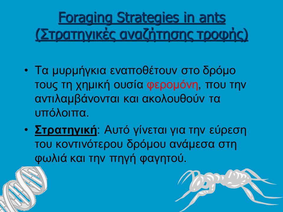 Foraging Strategies in ants (Στρατηγικές αναζήτησης τροφής) Τα μυρμήγκια εναποθέτουν στο δρόμο τους τη χημική ουσία φερομόνη, που την αντιλαμβάνονται και ακολουθούν τα υπόλοιπα.