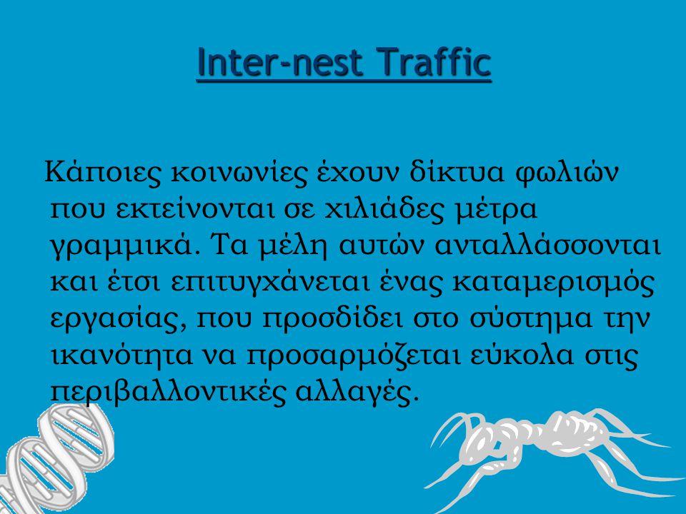 Inter-nest Traffic Κάποιες κοινωνίες έχουν δίκτυα φωλιών που εκτείνονται σε χιλιάδες μέτρα γραμμικά.