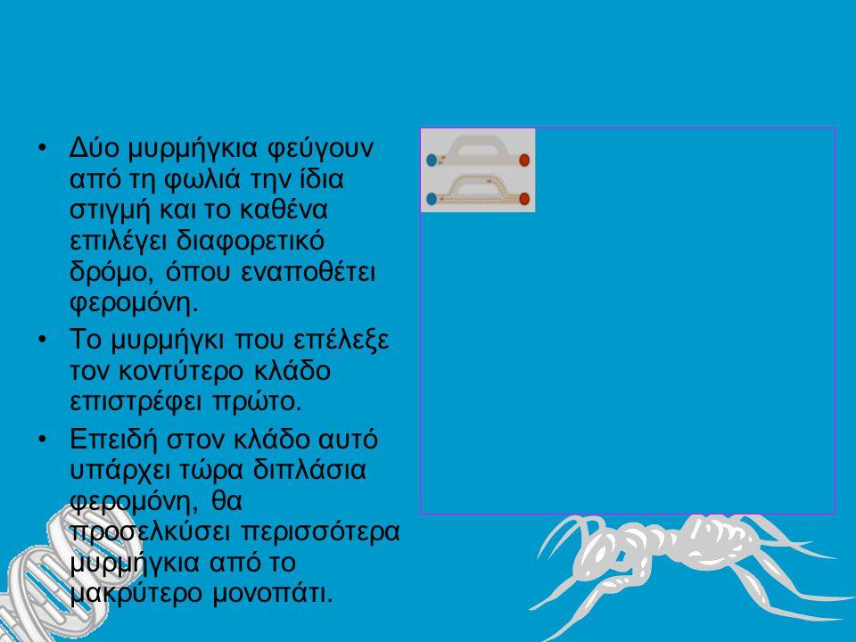 Δύο μυρμήγκια φεύγουν από τη φωλιά την ίδια στιγμή και το καθένα επιλέγει διαφορετικό δρόμο, όπου εναποθέτει φερομόνη.
