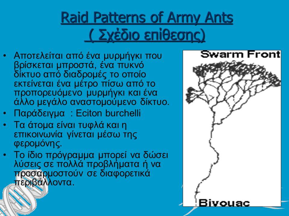 Raid Patterns of Army Ants ( Σχέδιο επίθεσης) Αποτελείται από ένα μυρμήγκι που βρίσκεται μπροστά, ένα πυκνό δίκτυο από διαδρομές το οποίο εκτείνεται ένα μέτρο πίσω από το προπορευόμενο μυρμήγκι και ένα άλλο μεγάλο αναστομούμενο δίκτυο.
