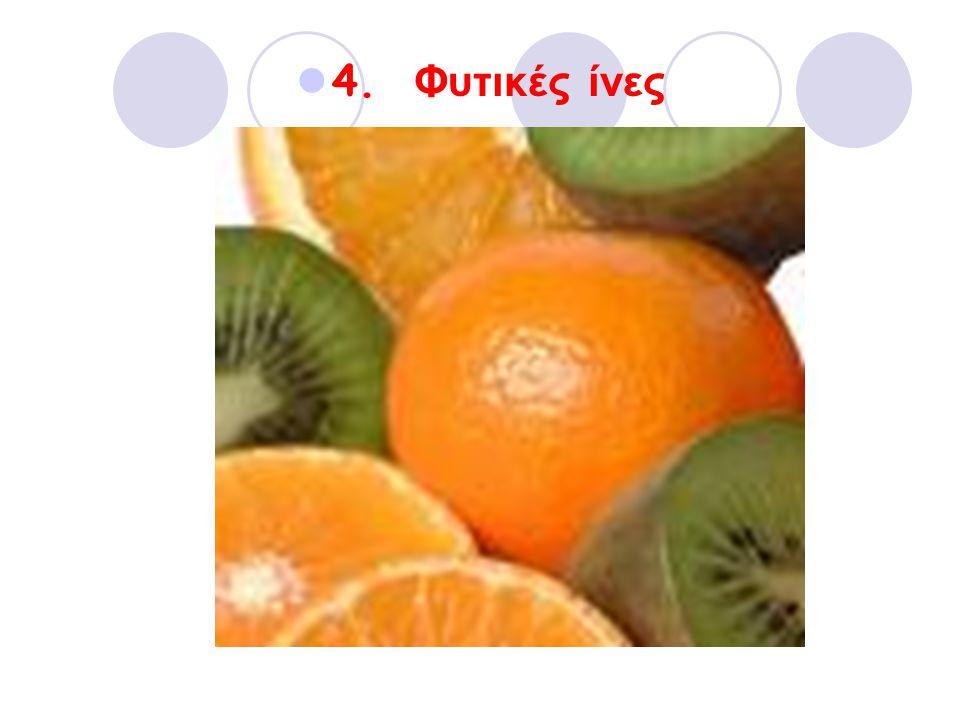 4. Φυτικές ίνες
