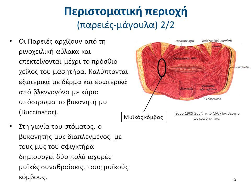 Περιστοματική περιοχή (χείλη) Τα χείλη του στόματος, το άνω και κάτω, αποτελούνται από μυς και αδένες και καλύπτονται εξωτερικά από δέρμα εσωτερικά από βλεννογόνο.