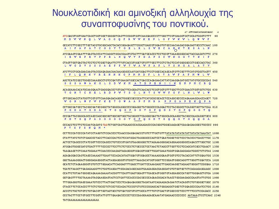 Νουκλεοτιδική και αμινοξική αλληλουχία της συναπτοφυσίνης του ποντικού.