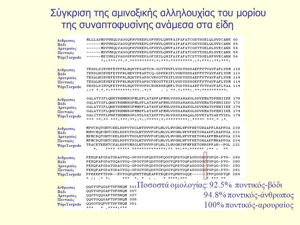 Σύγκριση της αμινοξικής αλληλουχίας του μορίου της συναπτοφυσίνης ανάμεσα στα είδη Αρουραίος Βόδι Ανθρωπος Ποντικός ΨάριTorpedo Αρουραίος Βόδι Ανθρωπος Ποντικός ΨάριTorpedo Αρουραίος Βόδι Ανθρωπος Ποντικός ΨάριTorpedo Αρουραίος Βόδι Ανθρωπος Ποντικός ΨάριTorpedo Αρουραίος Βόδι Ανθρωπος Ποντικός ΨάριTorpedo Αρουραίος Βόδι Ανθρωπος Ποντικός ΨάριTorpedo Ποσοστά ομολογίας: 92.5% ποντικός-βόδι 94.8% ποντικός-άνθρωπος 100% ποντικός-αρουραίος